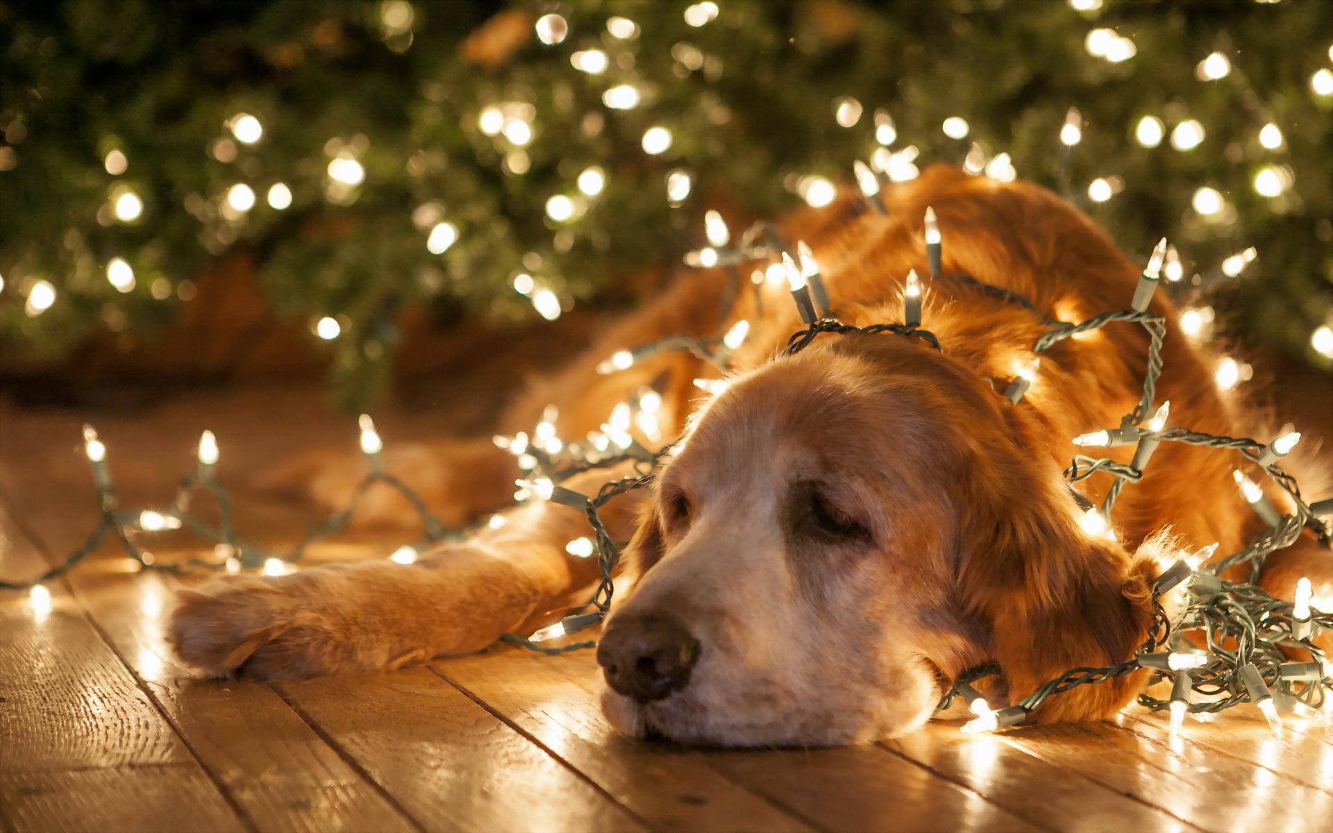 Fotos Profesionales De Navidad.Blog Para Profesionales